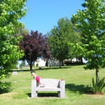 Kittel bench and boys' trees